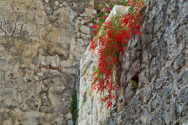 Download Fleurs sur le fond de ciel image stock. Image du vieux - 87702767