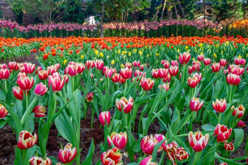 Fleurs sur le jardin images libres de droits