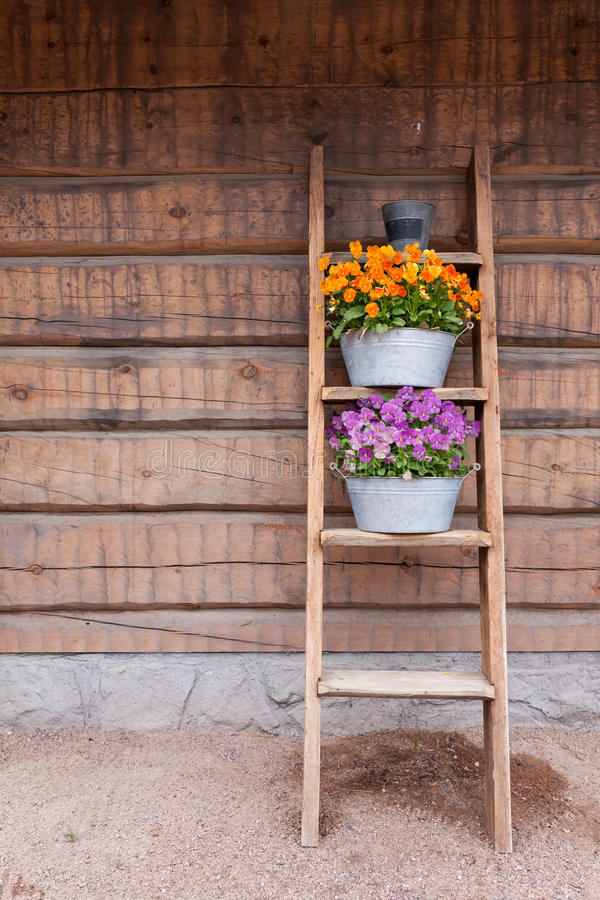 Fleurs sur le maigre d'étagère d'échelle au mur image libre de droits