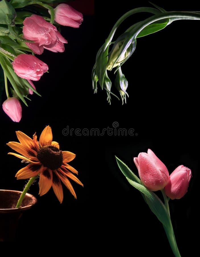 Fleurs sur le noir image stock