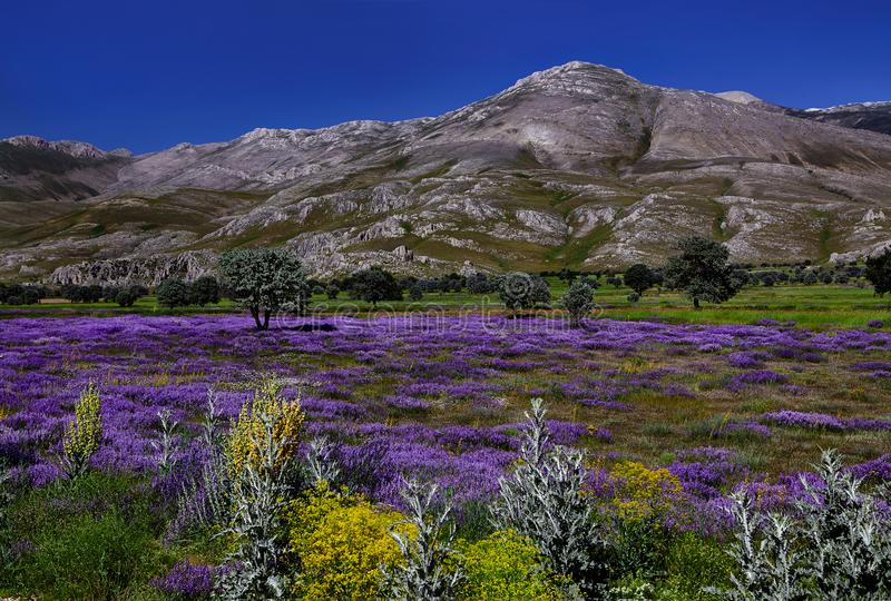 Fleurs sur les jupes de montagne photos libres de droits