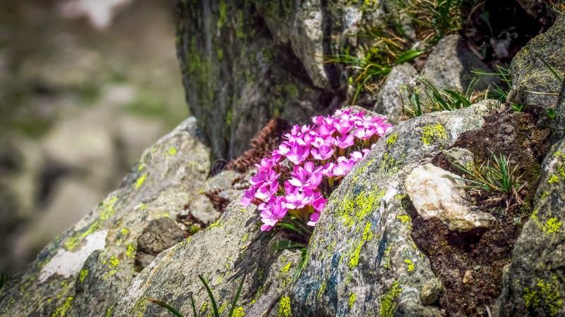 Fleurs sur les roches image stock