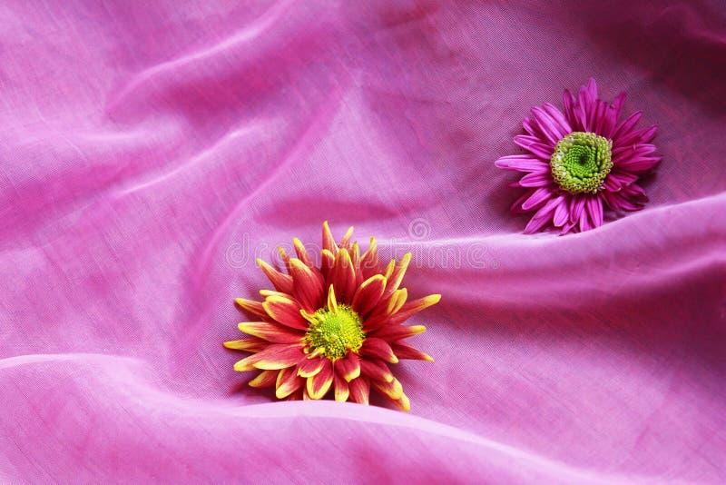 Fleurs sur un fond rose photos libres de droits