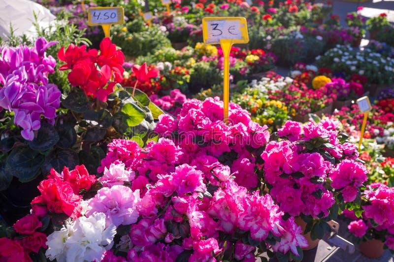 Fleurs sur un marché en plein air photos stock