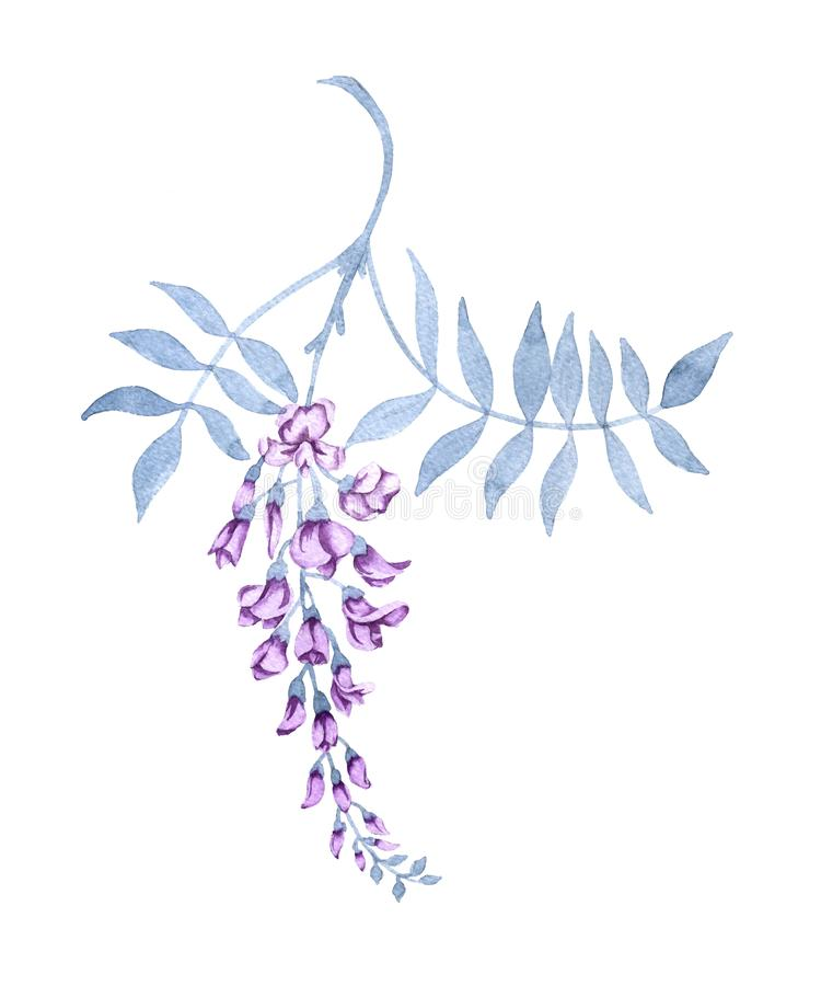Fleurs sur une branche d'une glycine D'isolement sur le fond blanc illustration libre de droits