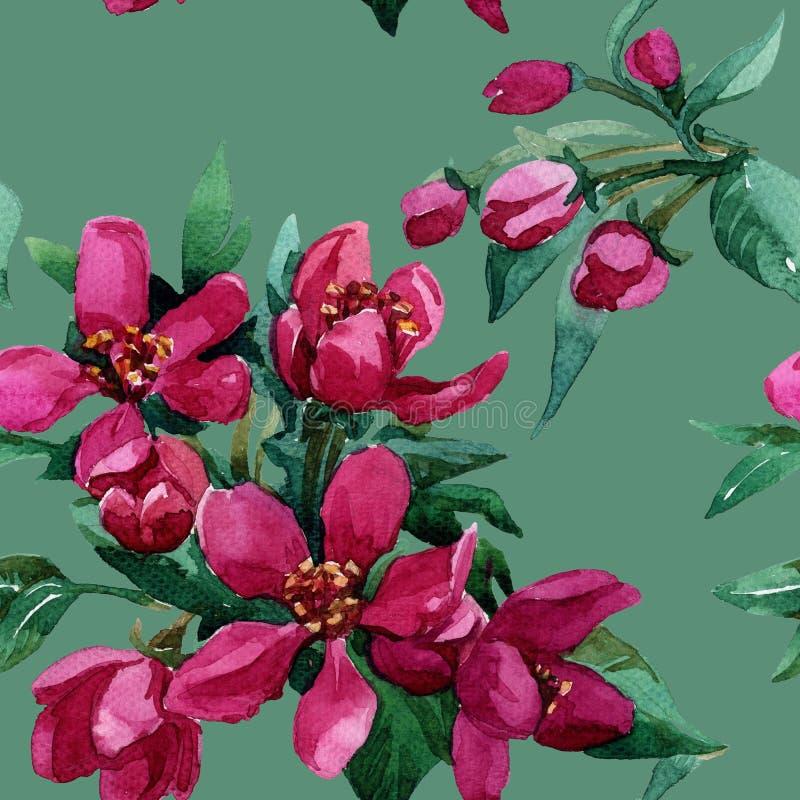 Fleurs sur une branche se développante au printemps image stock
