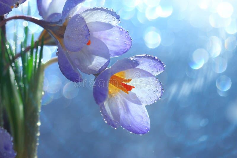 Fleurs tendres de source image libre de droits