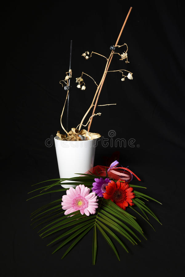 Fleurs toujours de durée image libre de droits