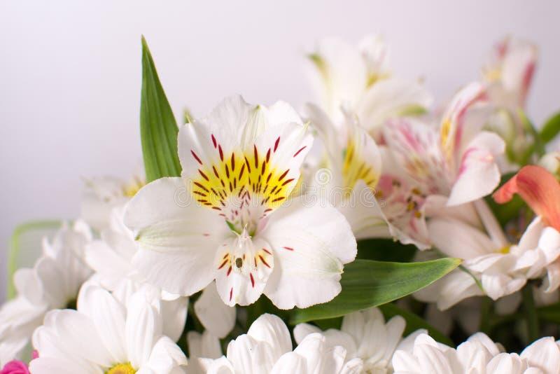 Fleurs très belles image libre de droits