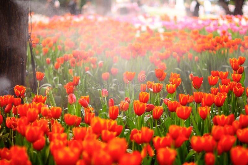 Fleurs très heureuses image stock