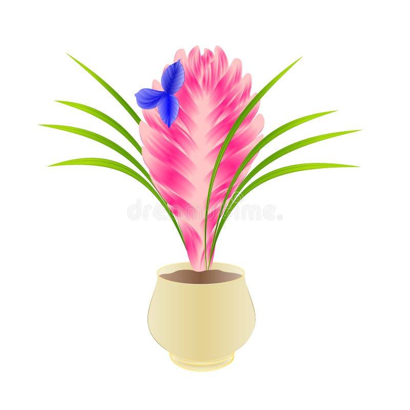 Fleurs tropicales de beau cyanea de tillandsia dans le pot d'isolement sur l'illustration blanche de vecteur de cru de fond edita illustration libre de droits