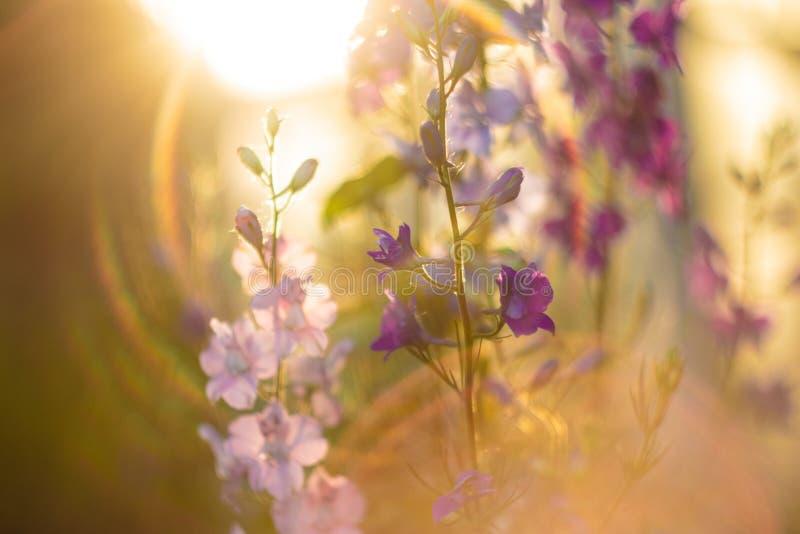 Fleurs ukrainiennes d'été Fusée lumineuse photos libres de droits