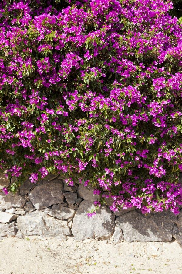 Fleurs vibrantes sur le mur en pierre photos libres de droits