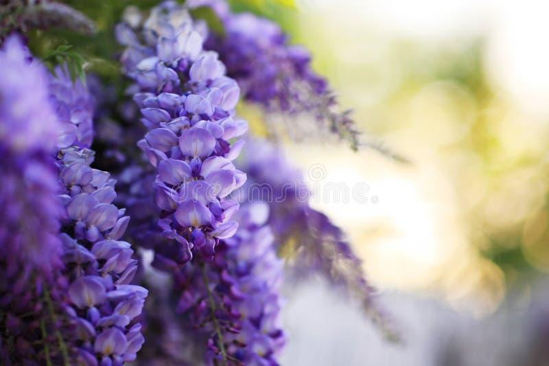 Fleurs violettes images stock
