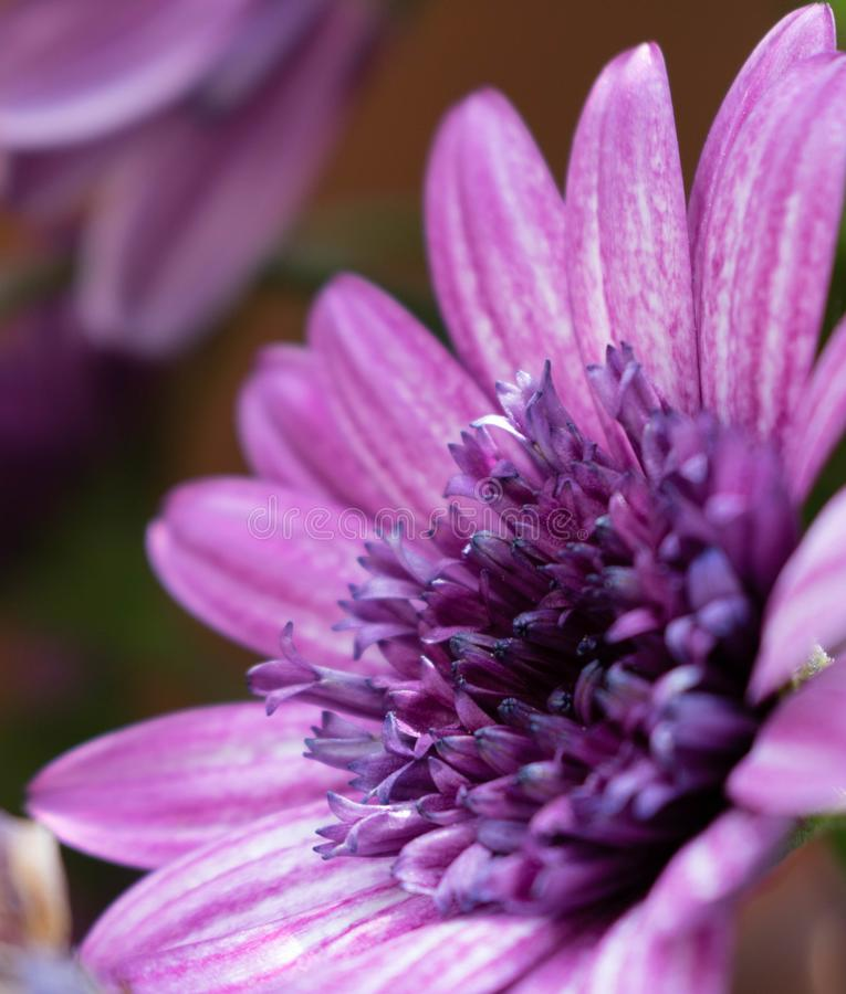 Fleurs violettes enjoing le soleil images libres de droits