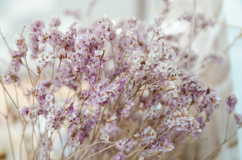 Fleurs violettes et jaunes de statice photographie stock