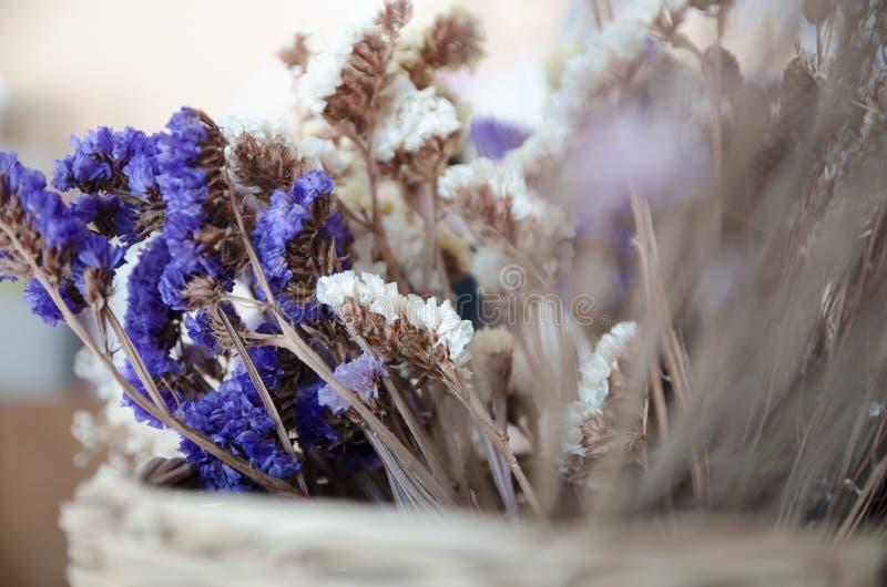 Fleurs violettes et jaunes de statice images stock