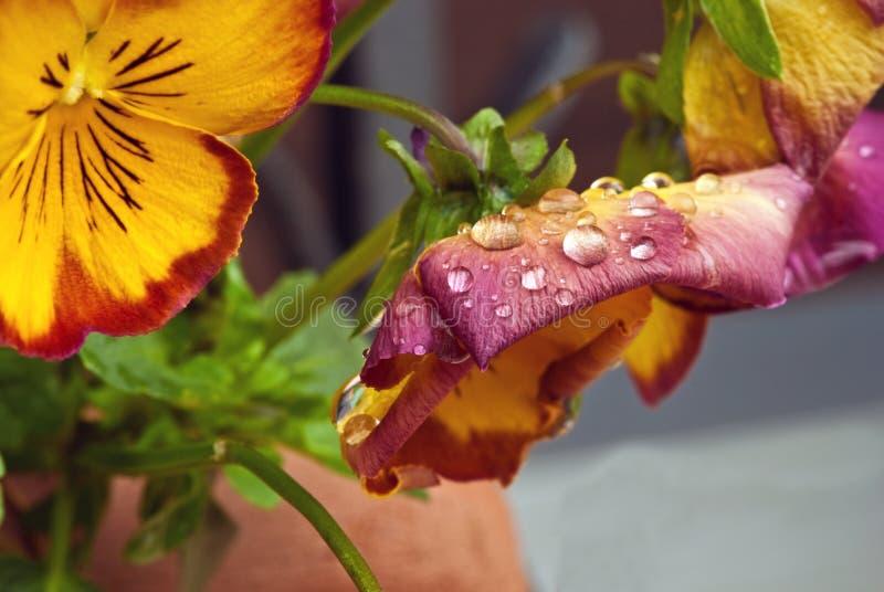 Fleurs violettes humides