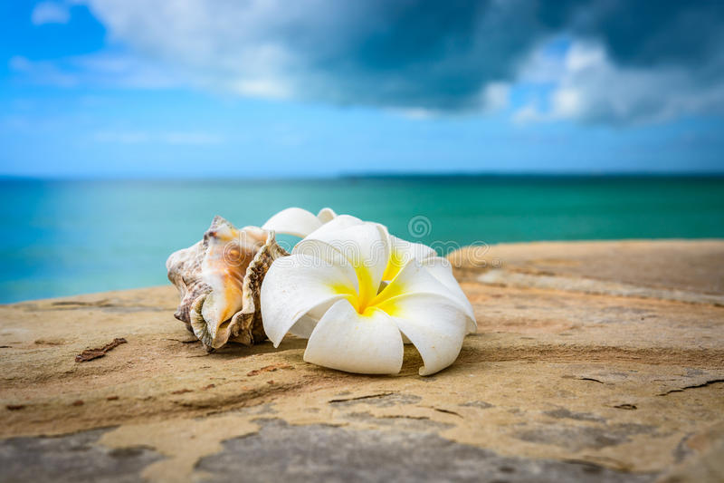 Fleurs Zanzibar photographie stock libre de droits