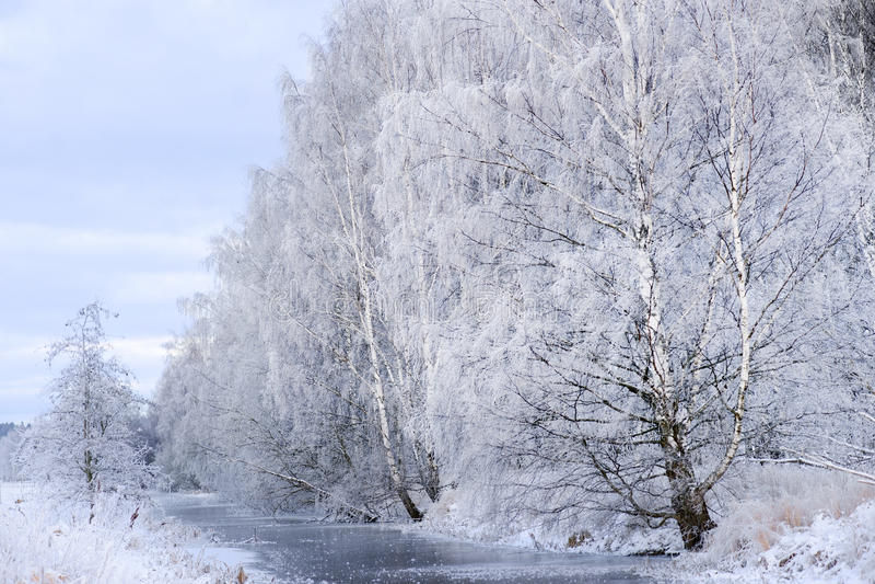 Fleuve avec des arbres en hiver photo libre de droits