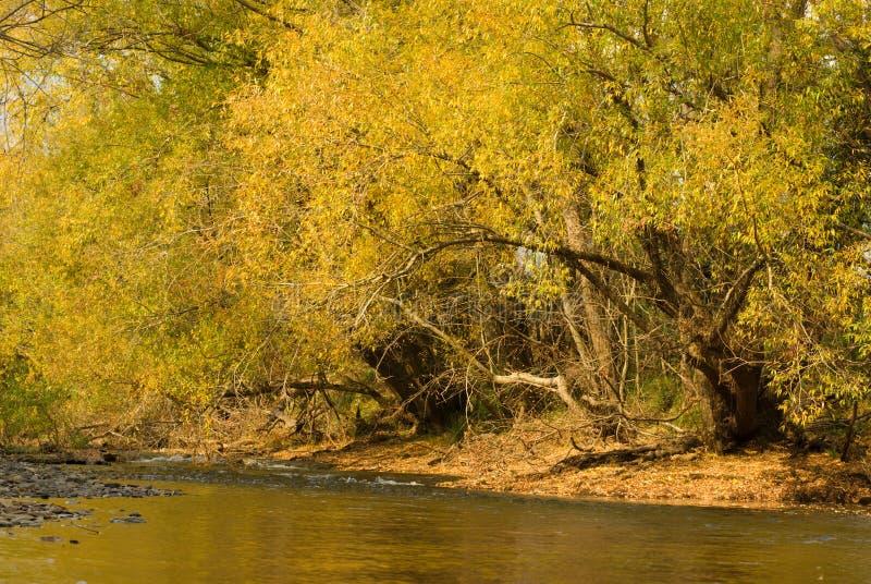 fleuve d'automne image libre de droits