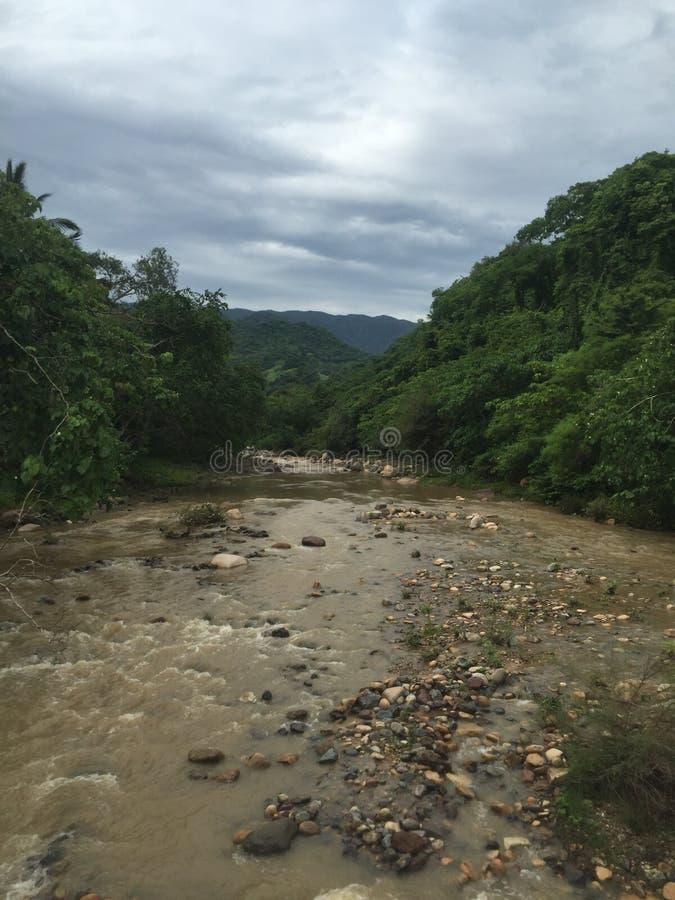 Fleuve de jungle images libres de droits