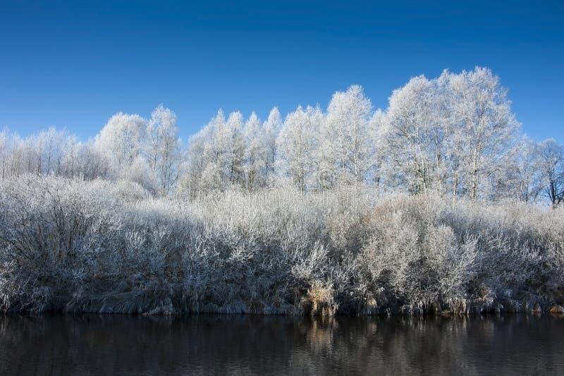 Fleuve de l'hiver et arbres figés photos libres de droits