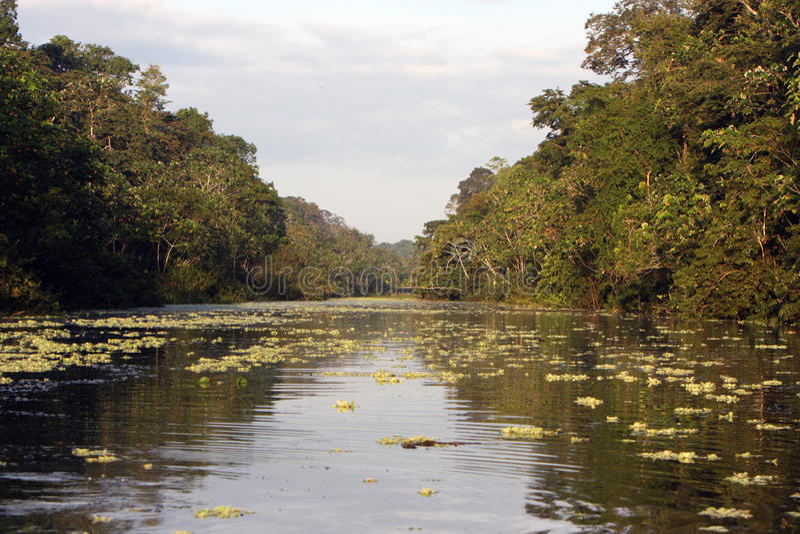 Fleuve et jungle d'Amazone photos libres de droits