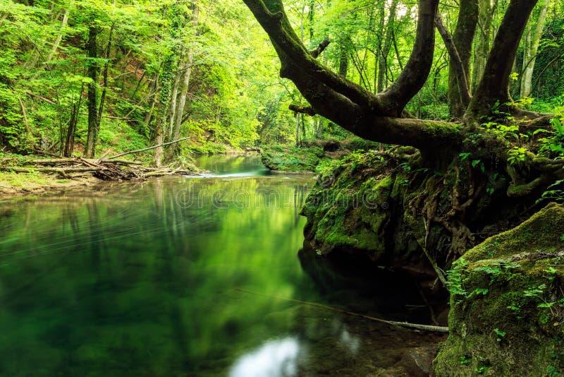 Fleuve profondément dans la forêt de montagne images libres de droits