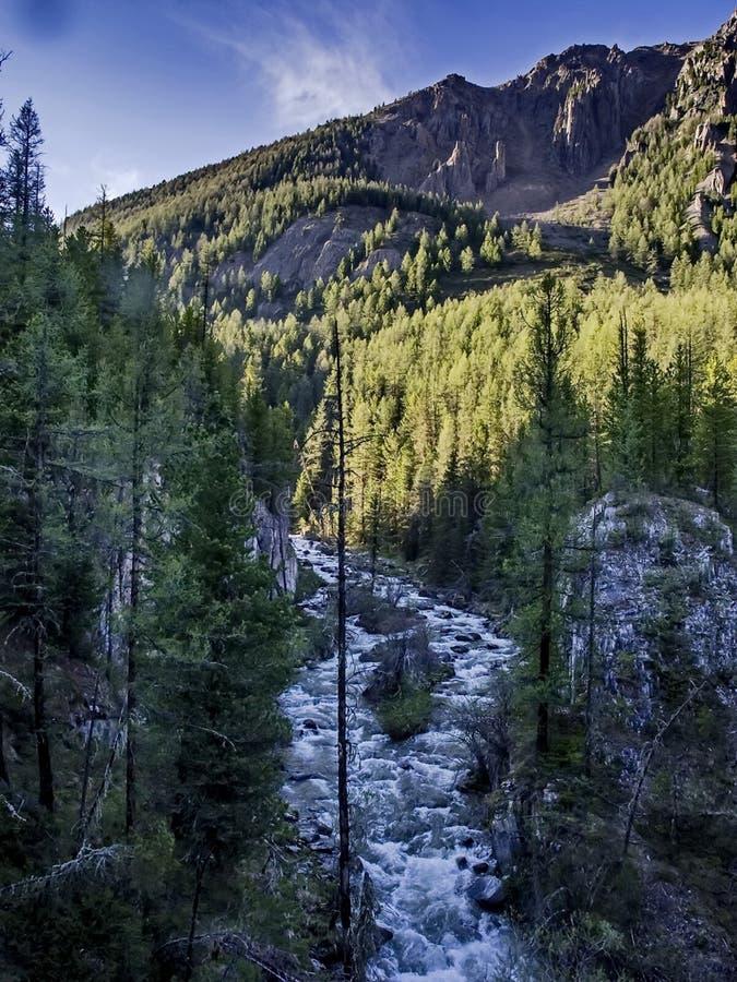 Fleuve rapide de montagne Cascade Rivière de montagne d'eaux de plus près de la source photos libres de droits