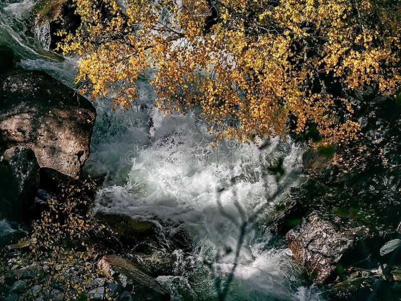 Fleuve rapide de montagne Cascade Rivière de montagne d'eaux de plus près de la source photos stock