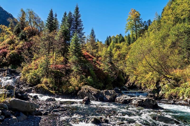 Fleuve rapide de montagne Cascade Rivière de montagne d'eaux de plus près de la source La rivière de Tumnin est la plus grande ri photo libre de droits