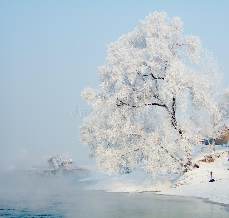 Fleuve rimé d'arbre et de glace images stock