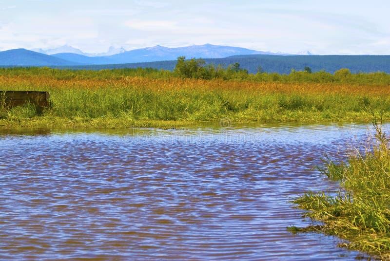Fleuve sur la plaine photo libre de droits
