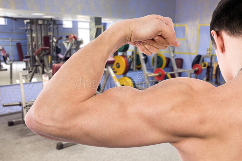 Download Flexing biceps in gym stock photo. Image of exercise - 28878074