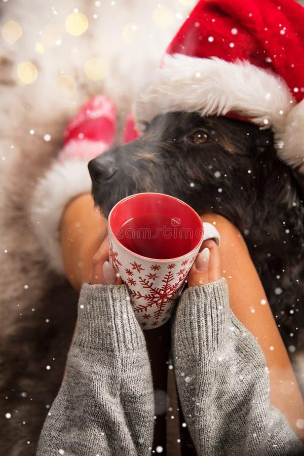 Flicka i julsockor med hennes hund arkivfoton