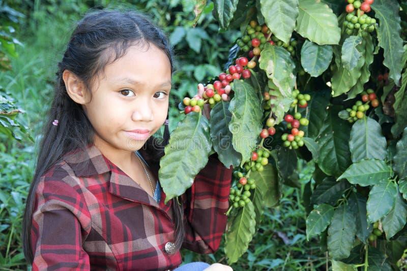 Flicka i kaffekolonier fotografering för bildbyråer