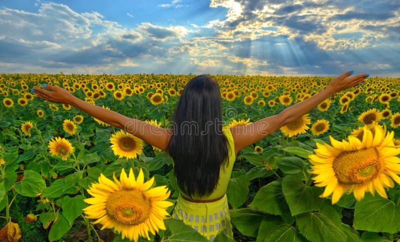 Flicka i solrosfält i sommar med armar som lyfts upp royaltyfri fotografi