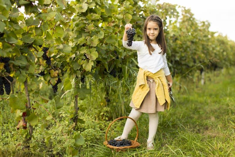 Flicka i vingård royaltyfri bild