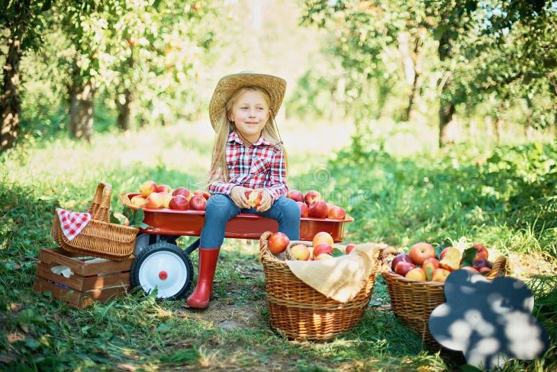 Flicka med Apple i den Apple frukttr?dg?rden H?rlig flicka som ?ter organiska Apple i frukttr?dg?rden H?sten l?ter vara kanten me fotografering för bildbyråer