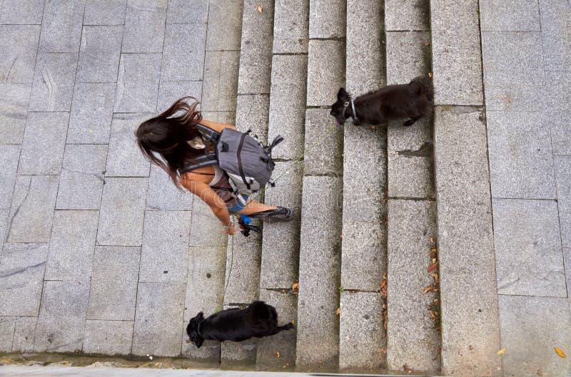 Flicka med att resa för två hundkapplöpning royaltyfri fotografi