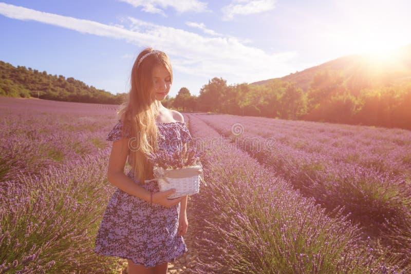 Flicka med en korg av lavendelblommor i ett blommande lavendelfält, Provence, Frankrike arkivfoton