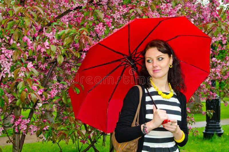 Flicka med paraplyet i de körsbärsröda blomningarna fotografering för bildbyråer
