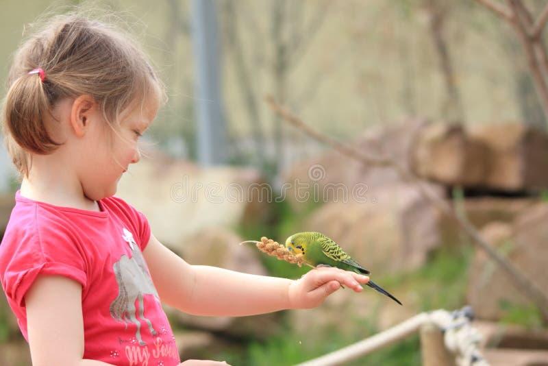 Flicka med undulat fotografering för bildbyråer