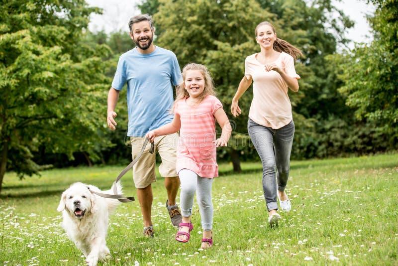 Flicka och föräldrar med golden retriever arkivbild