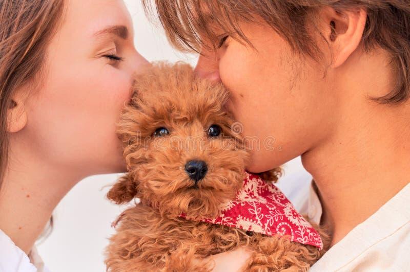 Flicka och grabb som rymmer den lockiga gulliga valpen, kysskram royaltyfri bild