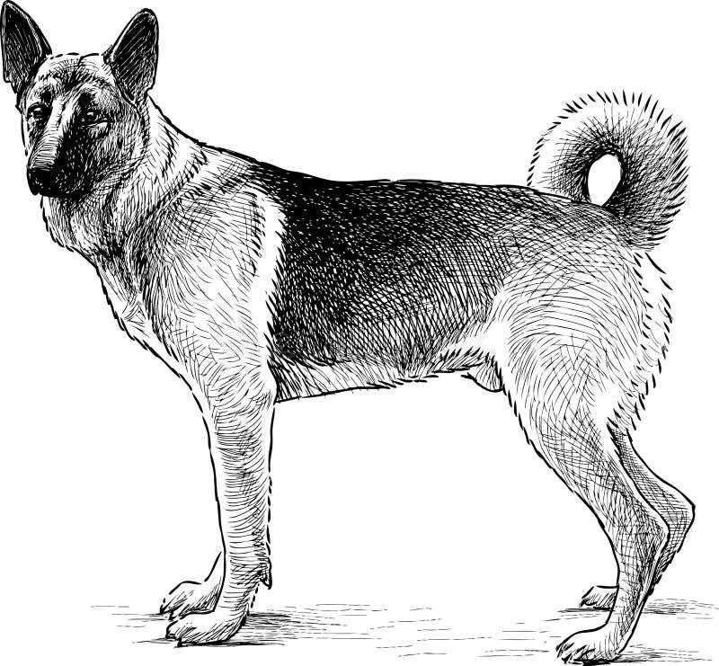 Flicka och häst royaltyfri illustrationer