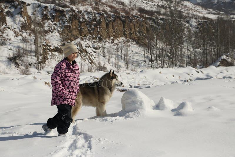 Flicka och hund Malamut i bergen royaltyfri bild