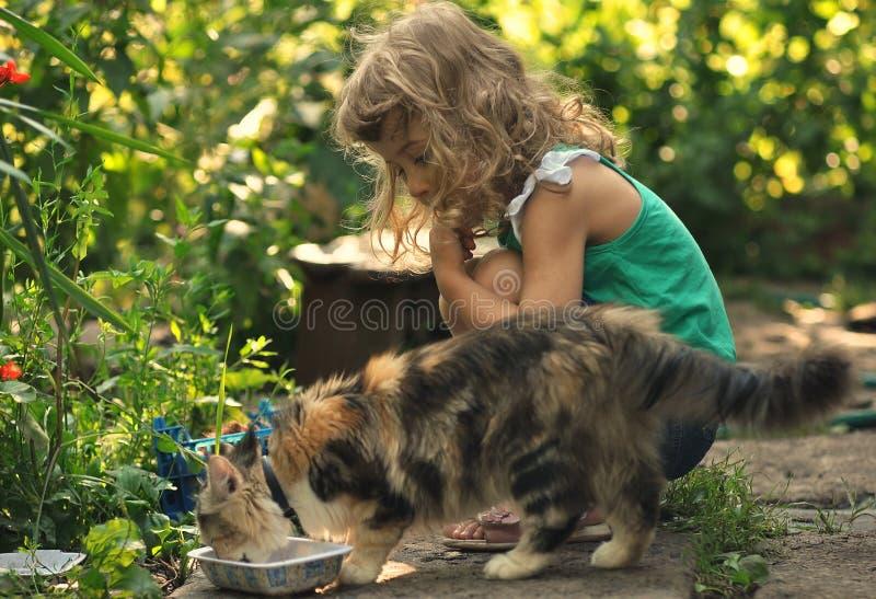 Flicka och katt arkivbilder