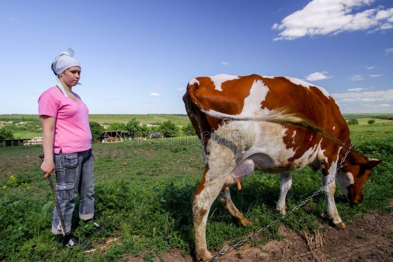 Flicka och kon i ett fält Herde och ko Bonde Shepherd med att beta kor, herdekvinna med nötkreatur arkivbild